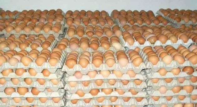 قطاع إنتاج البيض بالمغرب يحقق رقم معاملات يقدر بـ5 ملايير درهم