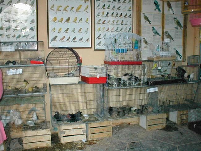 طير الحَسُّون في طور الانقراض بالجهة الشرقية
