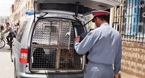 قوات أمنية تقتحم عدة منازل ببن الطيب باستعمال الكلاب البوليسية لهذا السبب؟