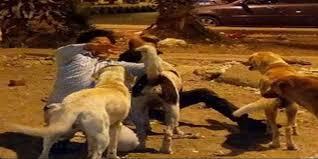 الكلاب الضالة بدوار خاضب بجماعة بني شيكر تهاجم التلاميذ الأطفال ـ وقائد القيادة آخر من يعلم