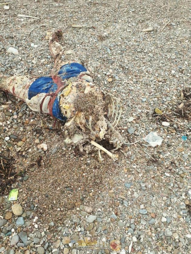 شاطئ امجاو يلفظ جثة شاب في مرحلة تحلل متقدمة