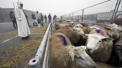 مساجد مدينة ميشيلين البلجيكية تدعو الى مقاطعة شراء أضحية عيد الأضحى.