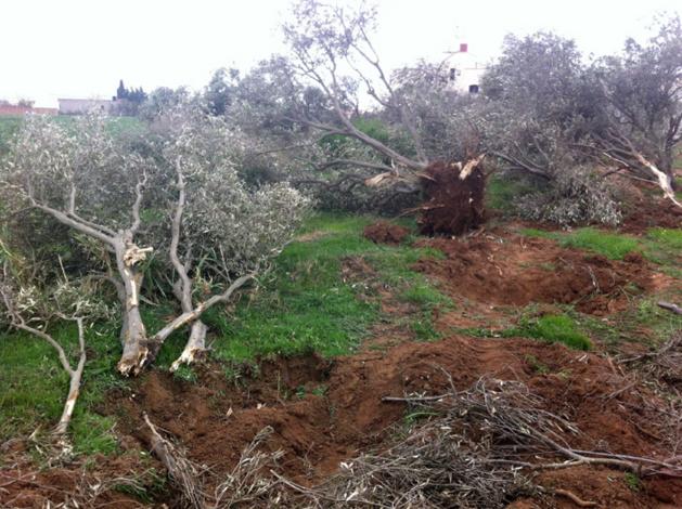 في غفلة من سلطات الناظور، السلطات الاسرائيلية تخترق الاقليم!!