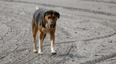 انتشار الكلاب الضالة بالحسيمة يكذب الرواية الرسمية للسلطة