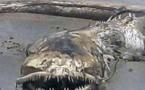 العثور على حيوان بحري مخيف.. وجدل حول نوعه