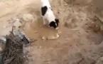كلب يشاهد جثة جرو فيدفنه بالتراب - فيديو