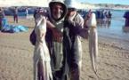 استئناف نشاط صيد الأخطبوط بالسواحل الشمالية