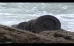إكتشاف حطام باخرة القيصر بوركوس بسواحل الداخلة